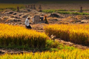 山东:临沂兰山、罗庄、河东等地发布畜禽养殖禁养区