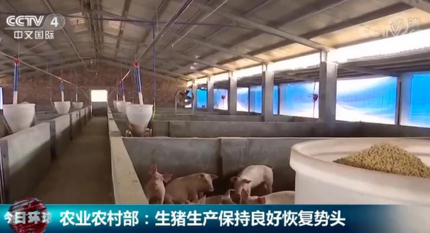 农业农村部:生猪生产保持良好恢复势头