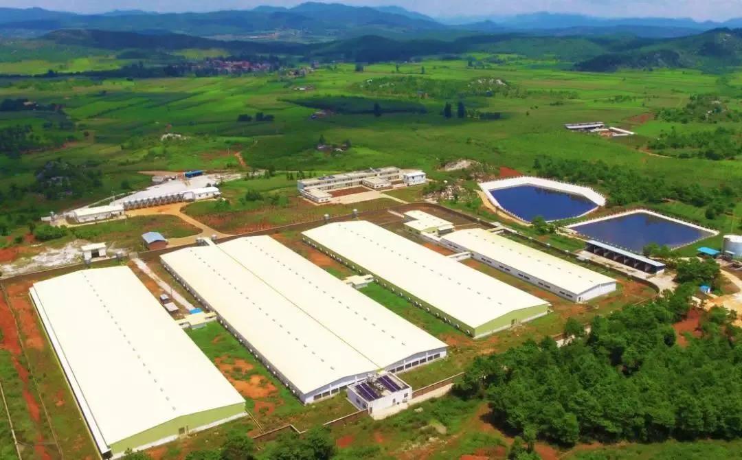 广州:花都这个养猪基地有望7月投产,年出栏商品肉猪6万余头