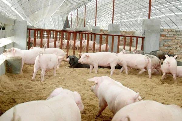 浙江:生猪也可以担保贷款!