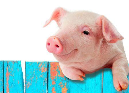 农发行黄陂支行投放5000万元贷款支持生猪生产