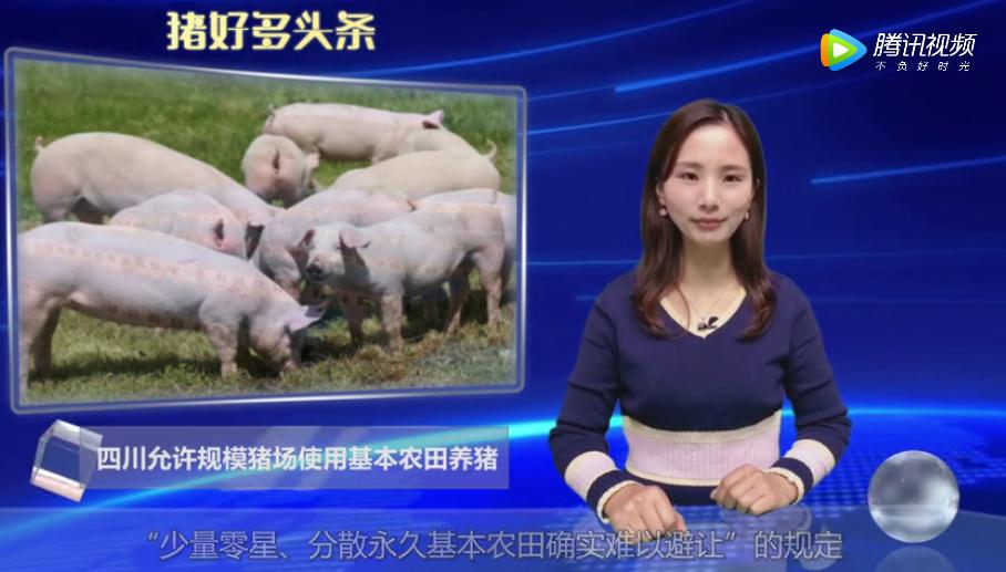 四川允许规模猪场使用基本农田养猪,并鼓励节约土地建楼房养猪!