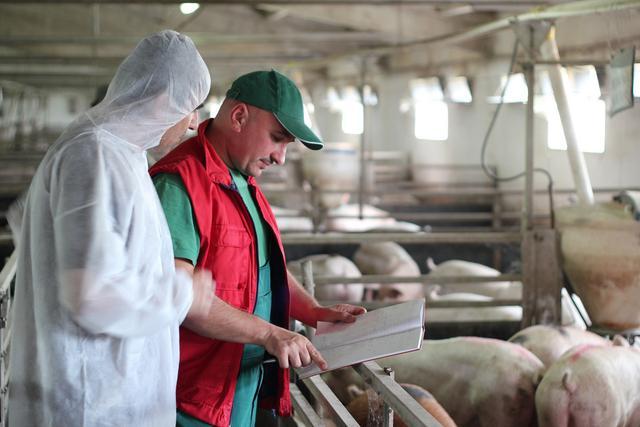 防控非洲猪瘟的猪场生物安全体系建设关键在哪?一线专家这样说