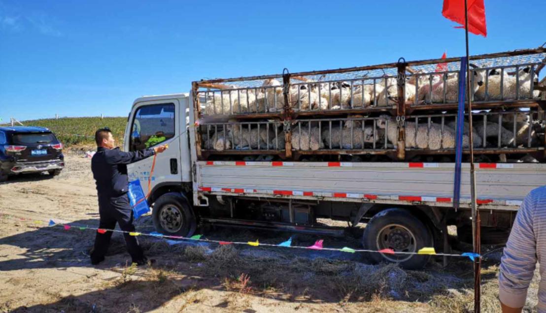 青岛胶州:年出栏超4万头生猪养殖基地加速建设