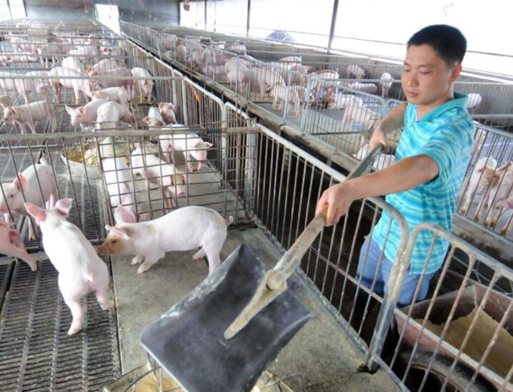 3月19日生猪价格,全国均价趋稳,东三省全面回涨,预计明日华北西北将跟进上涨