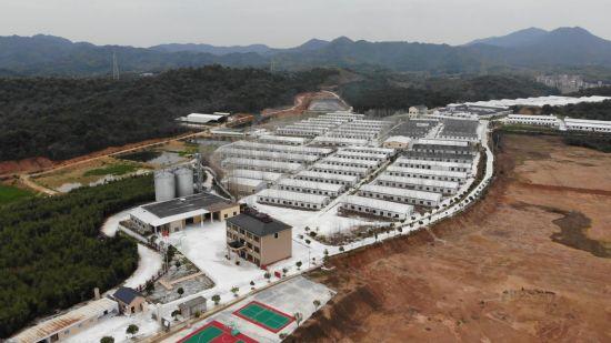 江西乐平扎实做好疫情期间市场生猪供应工作