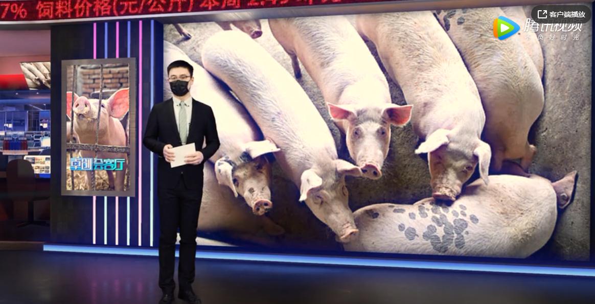 """卓创会客厅—生猪产能缓慢复苏 猪价""""身居高位""""到何时?"""