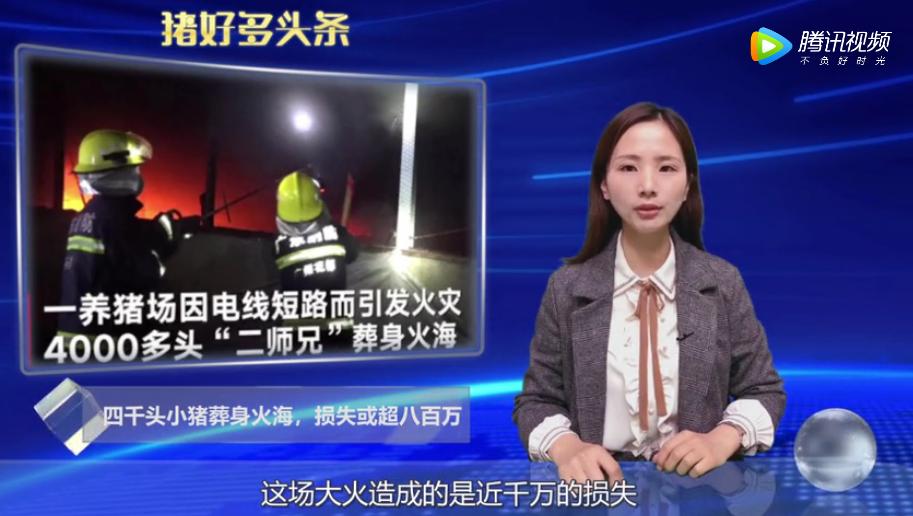 4000头小猪葬身火海,广州一保育猪舍起火,损失或超八百万!