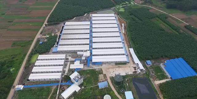康达尔徐闻县生猪养殖项目复工