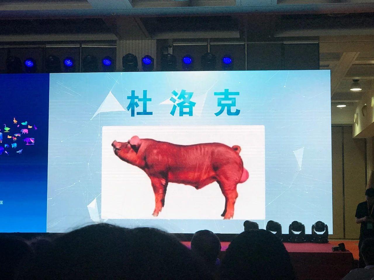 【直播回顾】超3万人参与的线上养猪课堂,到底讲了啥?