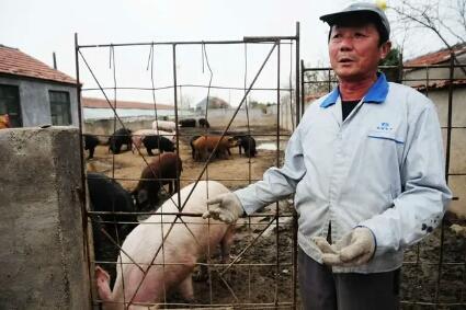 """猪价下跌""""泥沙俱下"""",高肉价或""""崩塌""""?应如何应对?"""