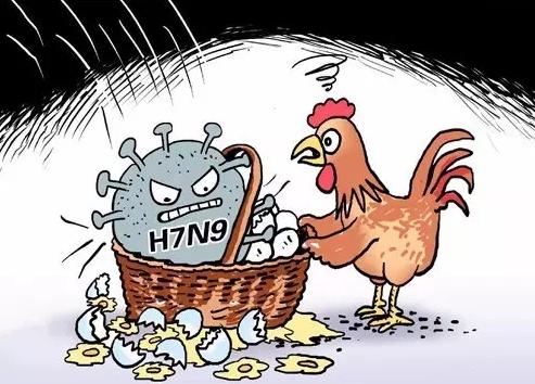 美国、菲律宾爆发禽流感疫情!超9万只禽类检出病毒