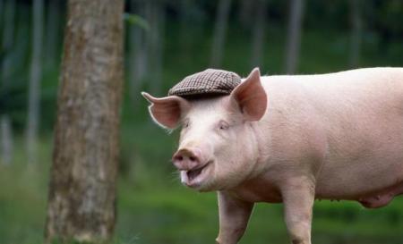 3月24日全国生猪价格内三元报价表,整体处于下跌状态,贵州下跌了0.74元/公斤!