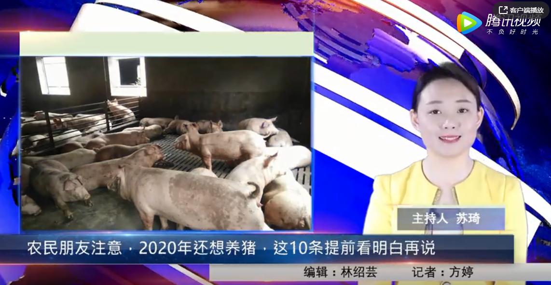 农民朋友注意,2020年还想养猪,这10条提前看明白再说