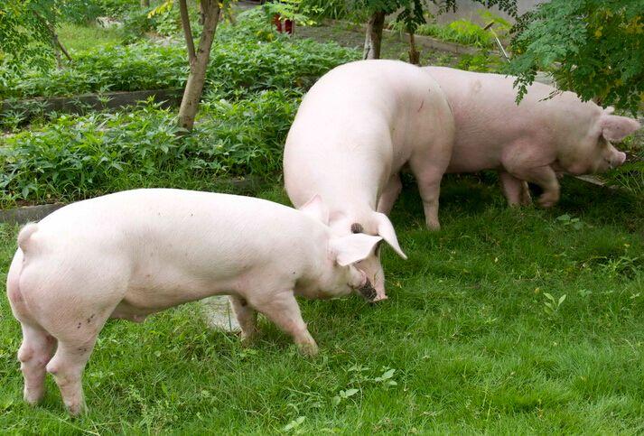 3月25日全国生猪价格外三元报价表,整体为下跌态势,波动不大!