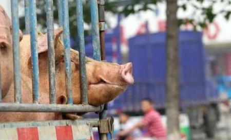 """矛盾加剧!一年少了1.1亿头猪,更难的是""""养不起"""""""