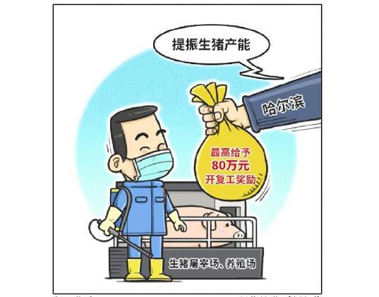 哈尔滨:提振生猪产能 最高给予80万元开复工奖励