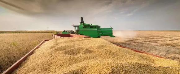 全球最大豆粕出口国封国闭港,或事关饲料企业生死存亡!