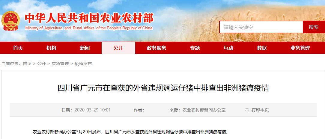 四川省广元市在查获的外省违规调运仔猪中排查出非洲猪瘟疫情
