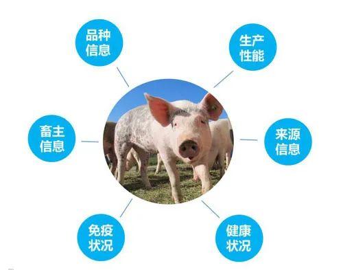 RFID技术在养猪业的应用前景