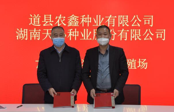 天心种业:与道县农鑫种业7200头母猪合作建设项目成功签约