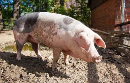 彭佳学副省长到我厅调研生猪产业高质量发展工作