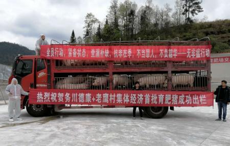 务川德康农牧有限公司首批生猪出栏助力精准扶贫
