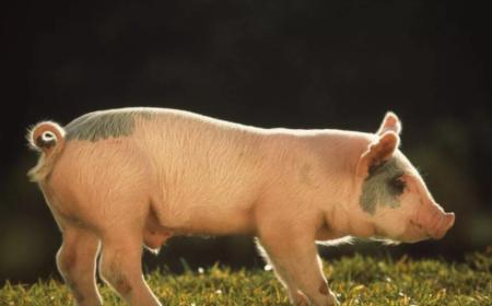 4月2日全国生猪价格内三元报价表,华中、华北两地区下跌明显!