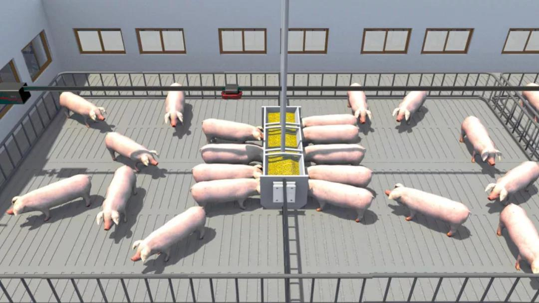 智能化养猪模式,究竟能帮我们做什么?