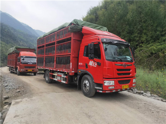 芦山县:首个标准化生猪代养场建成投产 预计年产值将达到2.5亿元