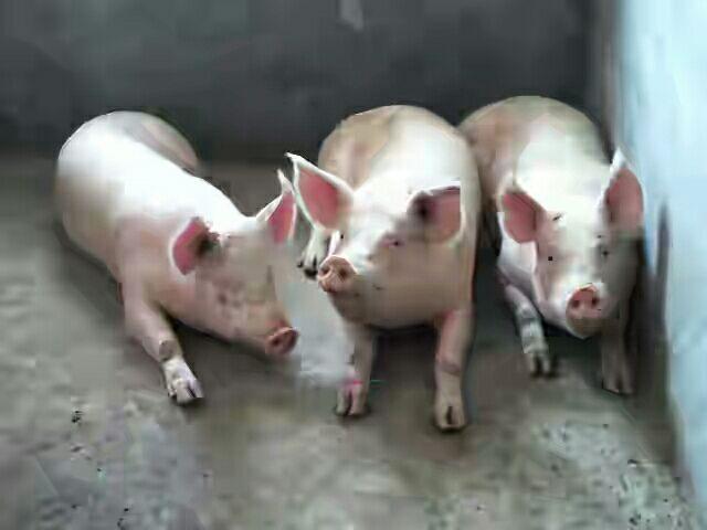 4月3日全国生猪价格内三元报价表,总体以下跌态势为主,贵州下跌最明显!
