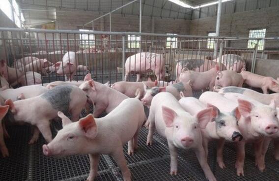 南昌市严厉打击生猪私屠滥宰违法行为