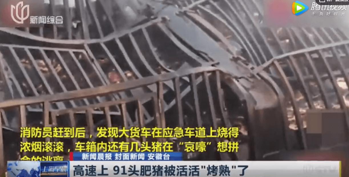 """浙江一货车起火91头肥猪死亡  现场""""哀嚎""""声不断"""