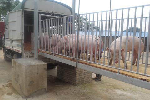 近期发生的非瘟均由违法违规调运引起,公安县对此开展生猪调运专项整治
