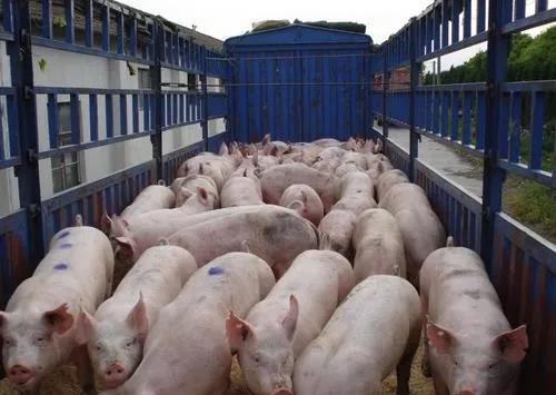 """最新消息:2020年!中央对养猪业要干""""5件大事""""!"""
