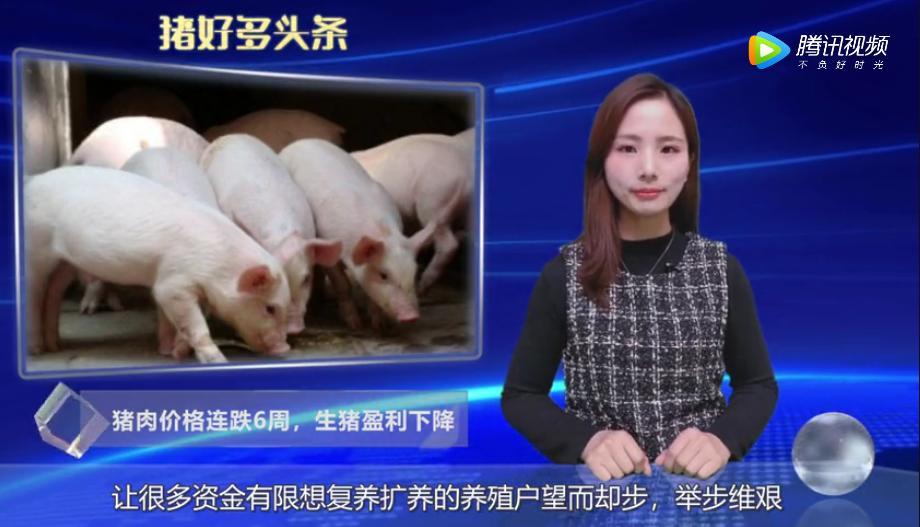 猪肉价格连跌6周,生猪盈利从2354元/头下降至1832元/头!