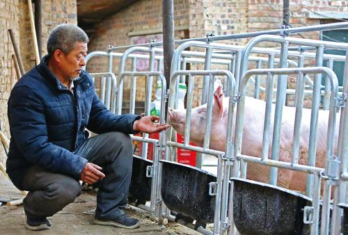 建档立卡贫困户的小康路:养猪脱贫致富奔小康