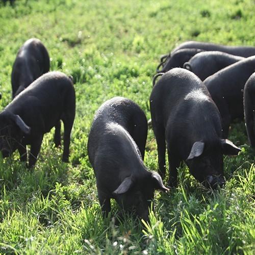 瓮安县生猪养殖产业迎来投资潮