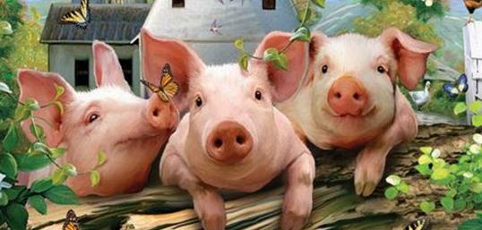 采取人工授精的方式为猪配种,可减少养殖成本的投入!