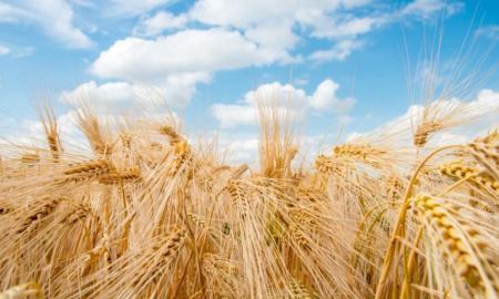 2020年4月中国农产品供需形势分析