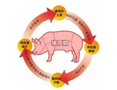 疫中季报丨猪周期飞扬?一季度生猪养殖公司净利大增,猪价或全年高位运行