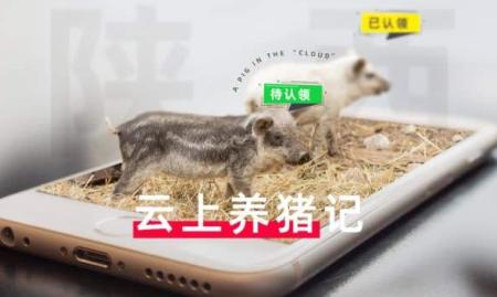 山东宁津:代养模式增加生猪产能