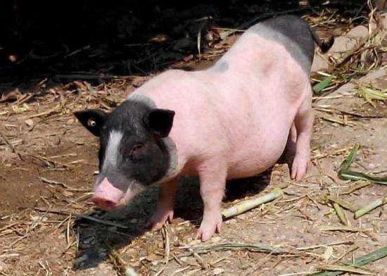 4月14日全国生猪价格土杂猪报价表,整体以下跌态势为主,上涨地区主要在北方!