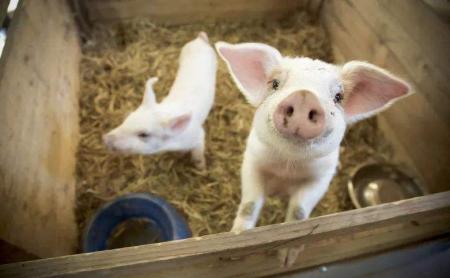 多部门召开视频会议推进东北4省区春耕生产 推动解决生猪信贷问题