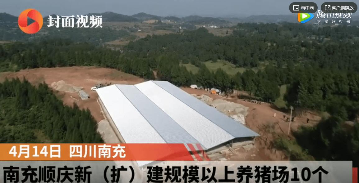 四川南充顺庆新建规模以上养猪场10个,预计年出栏量突破13万头!