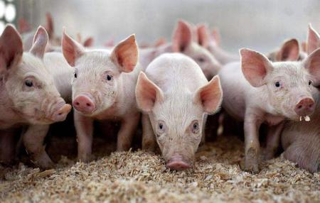 江苏东海县领导现场督导加快恢复生猪生产 强调稳生产保供给