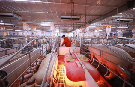 四川合江县凤鸣镇创新生猪产业发展模式 降低生猪产业发展风险