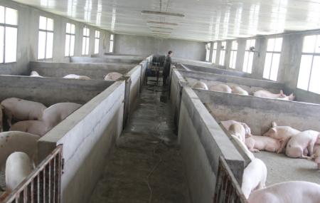 湖南48个生猪产能建设项目投产 新增生猪产能170万头