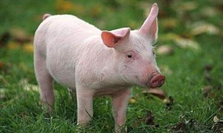 农业农村部派出督导组深入重点省份 督促恢复生猪生产和非洲猪瘟防控