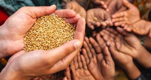 国内生猪养殖的迫切与现在的国际粮食危机,如何调解?